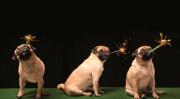 Hond + vuurwerk LLR